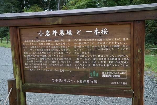 小岩井農場 一本桜1.JPG